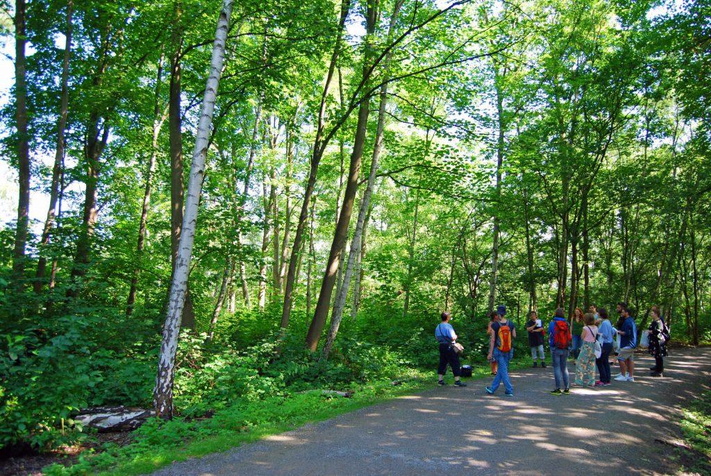 The wood on Halde Haniel